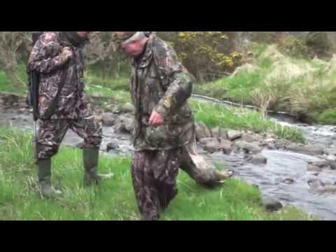Roe deer stalking in Scotland (2 Bucks)
