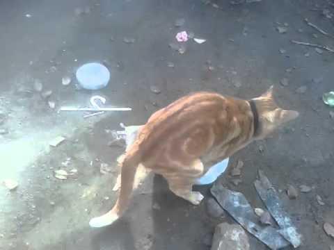 Gato y su conejita playboy