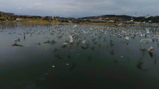 Watch Great Big Sea Seagulls video