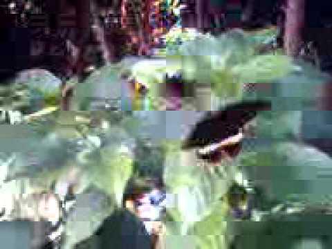 Video0024.3gp video