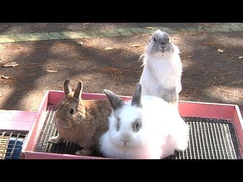 うさぎ年 年賀状撮影コーナー - 埼玉県こども動物自然公園 -