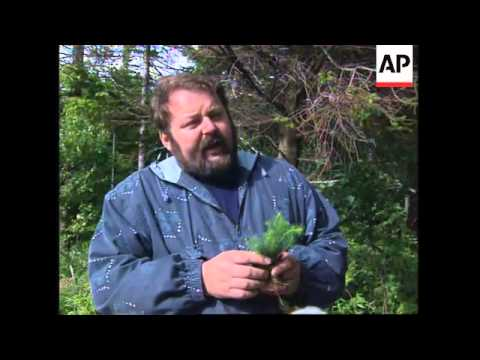 GERMANY: AIR POLLUTION KILLING TREES IN ERZGEBIRGE MOUNTAINS