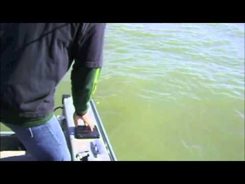Sturgeon Fishing - Benicia, CA