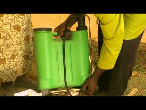 Shamba Shape Up - Spraying your Tomato Crop Thumbnail