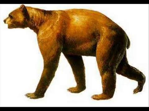 Top 10 mamíferos carnívoros prehistóricos