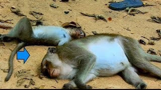 What Are These Little Baby and Mommy Doing Ground?|  Look Like Strange