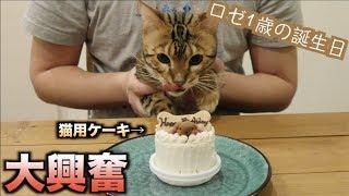 ロゼの誕生日なので猫用ケーキあげたら過去最高の野生化したwww