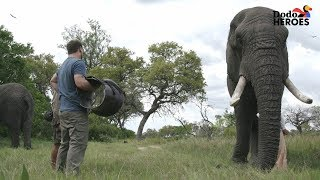 Elephant Who Hurt His Leg Gets Help From A Hero | Dodo Heroes Season 1