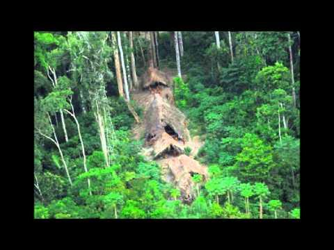 Bernard Lavilliers - Minha Selva