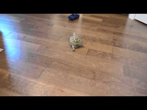 Tortoise vs. Truck Music Videos