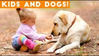 #funnydogs #babyvideos Amazing Dogs with Babies | Dog Love Baby Video Compilation April 2019