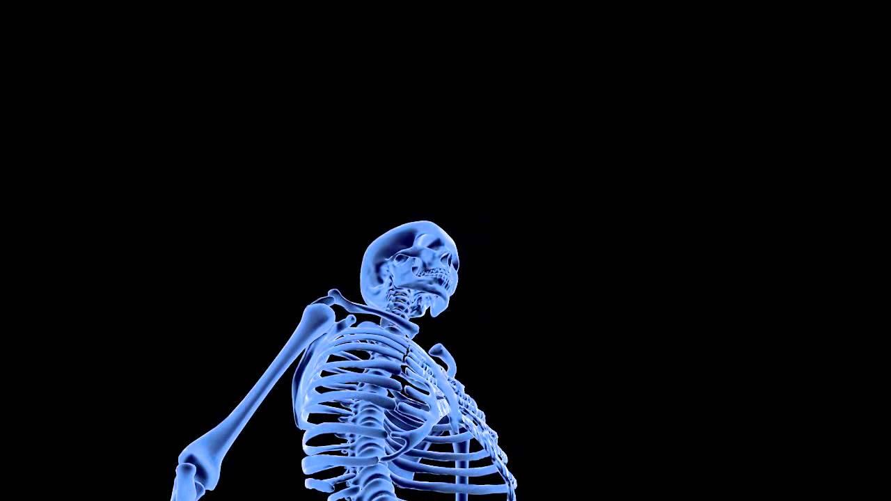 Xray Skeleton Skeleton N031209 - 3D model