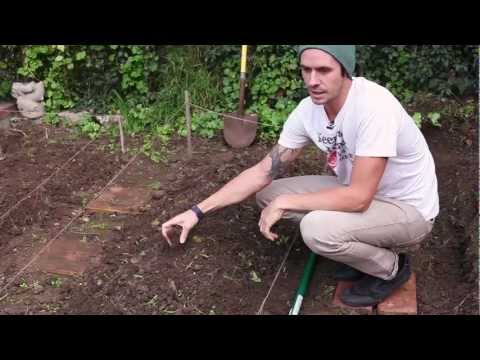 How To Start And Grow A DIY Organic Garden At Home - Keep A Breast Non Toxic Revolution