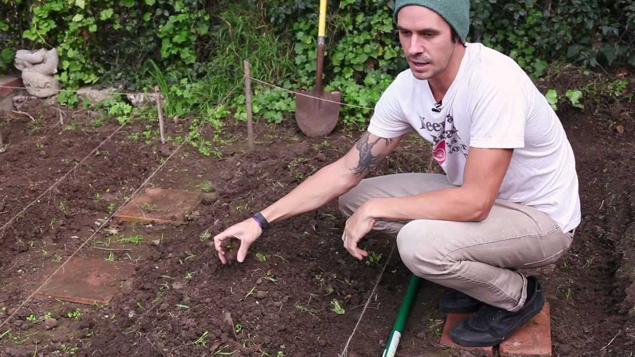 How To Start And Grow A Diy Organic Garden At Home Keep