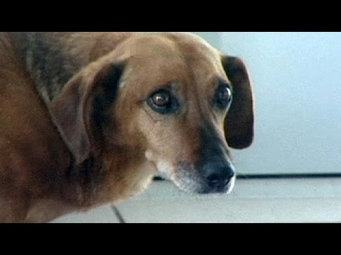 ماشا: كلب وفي لصاحبه في سيبريا