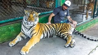 IN A CAGE FULL OF TIGERS (Warning: Very Sad Video)