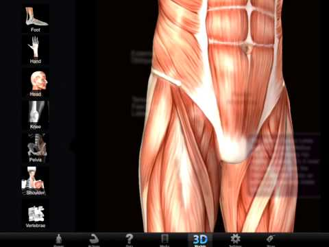 Muscle and Bone Anatomy 3D APK Cover