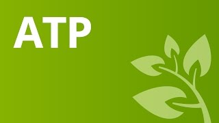 ATP - die Energiewährung | Biologie | Zellbiologie