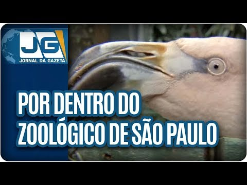 Por dentro do Zoológico paulistano