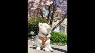 Adorable Puppies, Cute kitties, funny dogs, crazy cats and funny pets and animals!