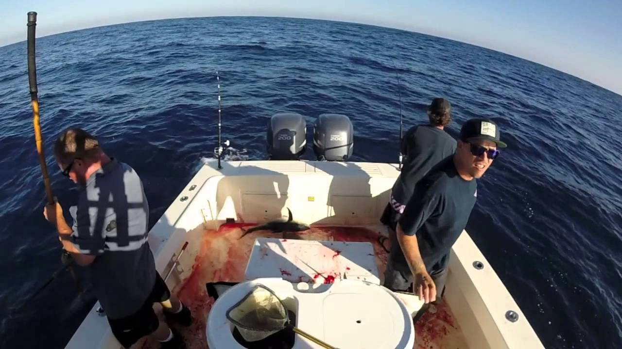 ONE DRIFT vol 4   Local tuna with SEASONS SPORTFISHING