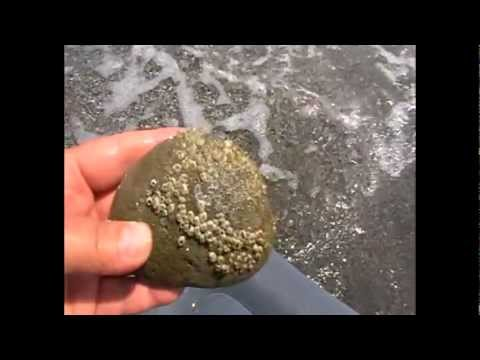 Пемза-камень.Природная находка для личного SPA-салона.Relax-Beach-Астара