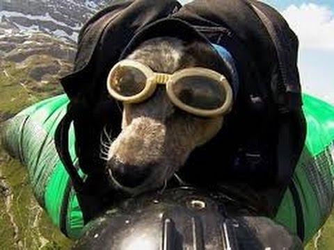 Increíbles perros paracaidistas