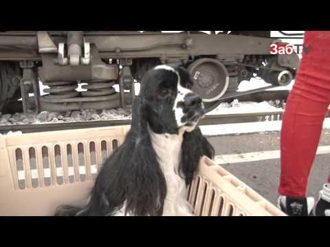 как провезти собаку в финляндию на поезде