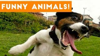 Cutest Pets of the Week Compilation October 2017   Funny Pet Videos