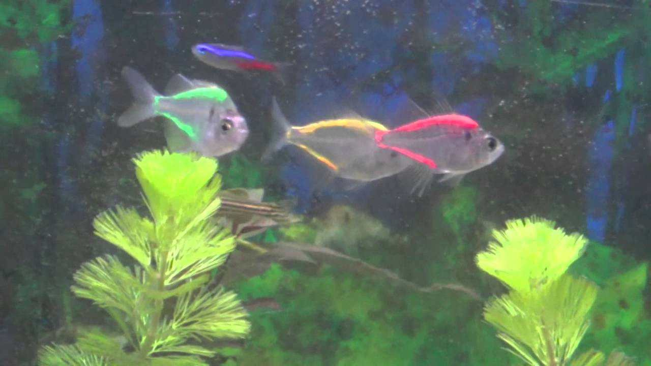 Painting Back Glass Aquarium