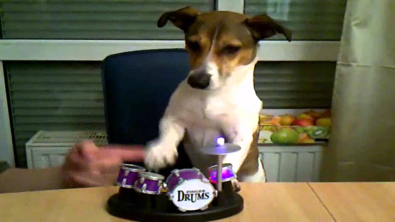 Hundeerziehung Lustiges Hunde Video Jack Russell Terrier