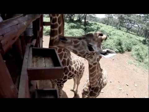 Elephant Orphanage, Giraffe Center & Local Market - Nairobi, Kenya