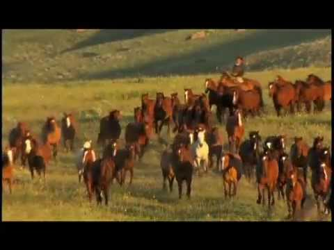 A Tribute to Ranching and the American Quarter Horse