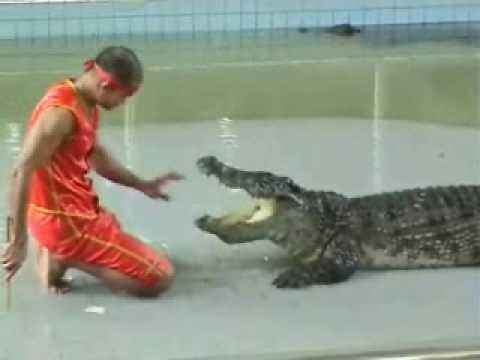 Шоу крокодилов Тайланд Паттайя