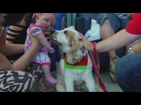 Therapy dogs in the school  wwlpcom