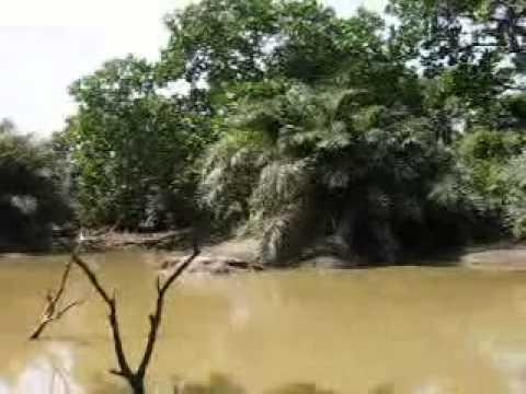 Abuko nature reserve - Gambia