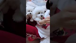 Look at these cute and funny puppies dogs 1846