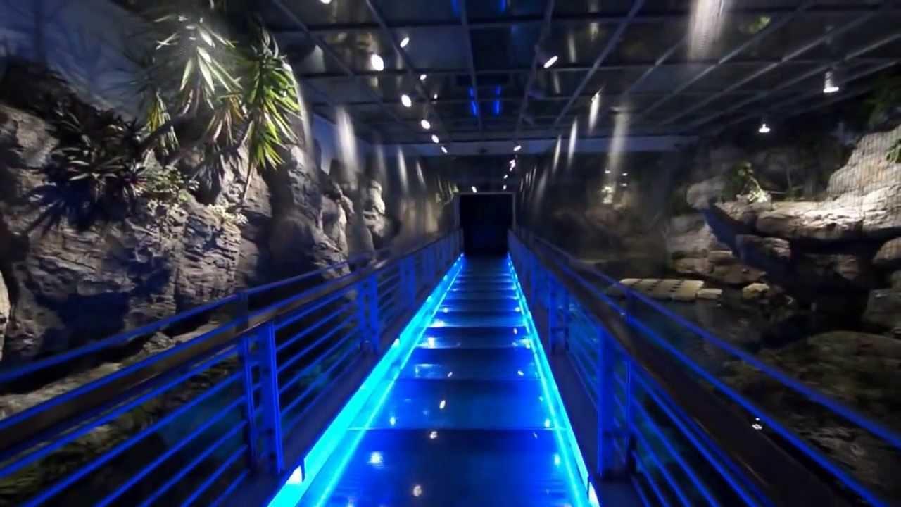 LED lighting in Genoa Aquarium - YouTube