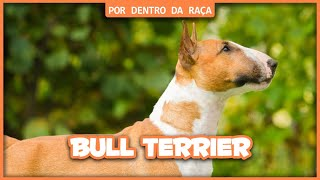 BULL TERRIER - POR DENTRO DA RAÇA