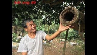 Thợ bắt ong, chia sẻ cách chọn gỗ làm thùng và kinh nghiệm bắt ong bằng thùng Đõ tròn truyền thống