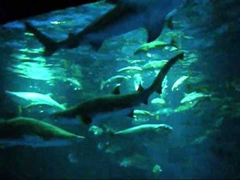 Sharks/The Coral Reef Sea World San Antonio