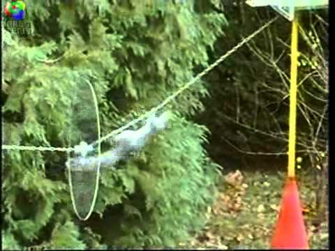 Mission Impossible Squirrel video