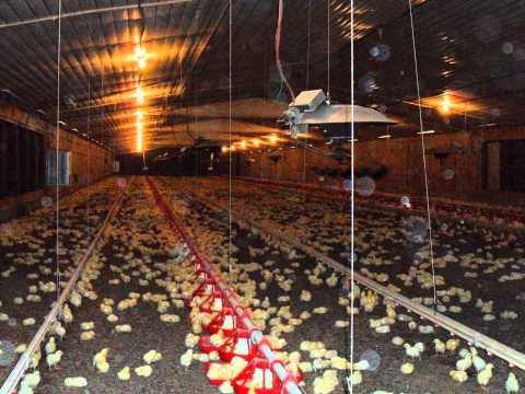 Poultry House For Sale Poultry Farm For Sale in