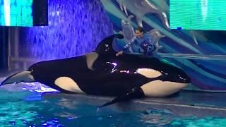 One Ocean (Full Night Show) January 20, 2018 - SeaWorld Orlando