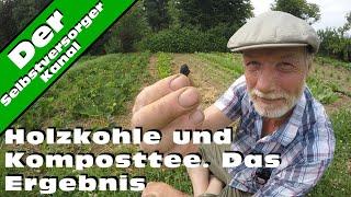Alternative Gartenbaumethoden. Holzkohle und Komposttee. Das Ergebnis.
