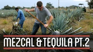Harvesting Agave (2/3) | How to Brew Everything: Mezcal and Tequila