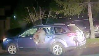 Daring sheriff breaks car window to free trapped bear