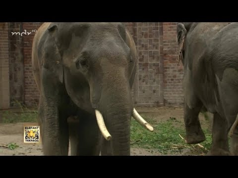 Zukunft der Elefantenherde