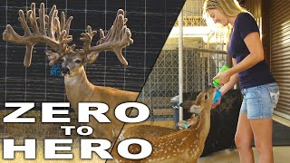 GIANT WHITETAIL FACTORY | Deer & Wildlife Stories