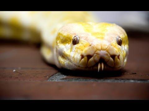 Каких змей можно встретить в Петербурге в самых неожиданных местах. Обувь, туалет, ресторан!